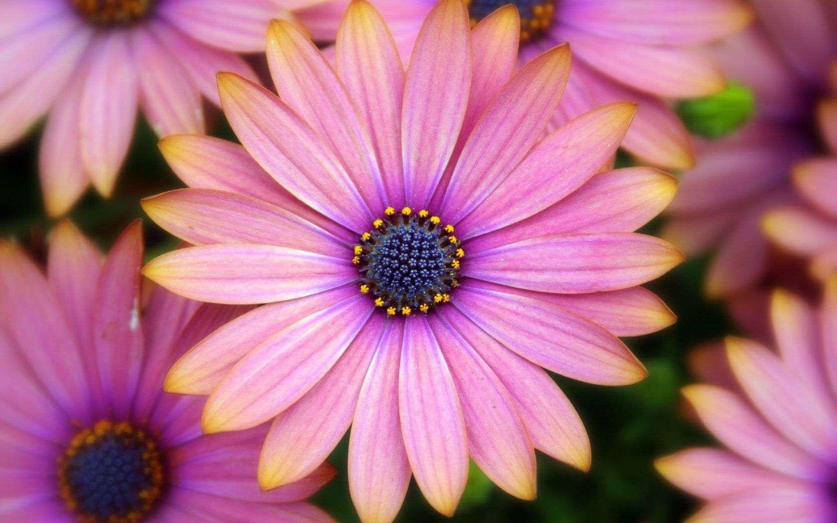 Flower Wallpaper 032