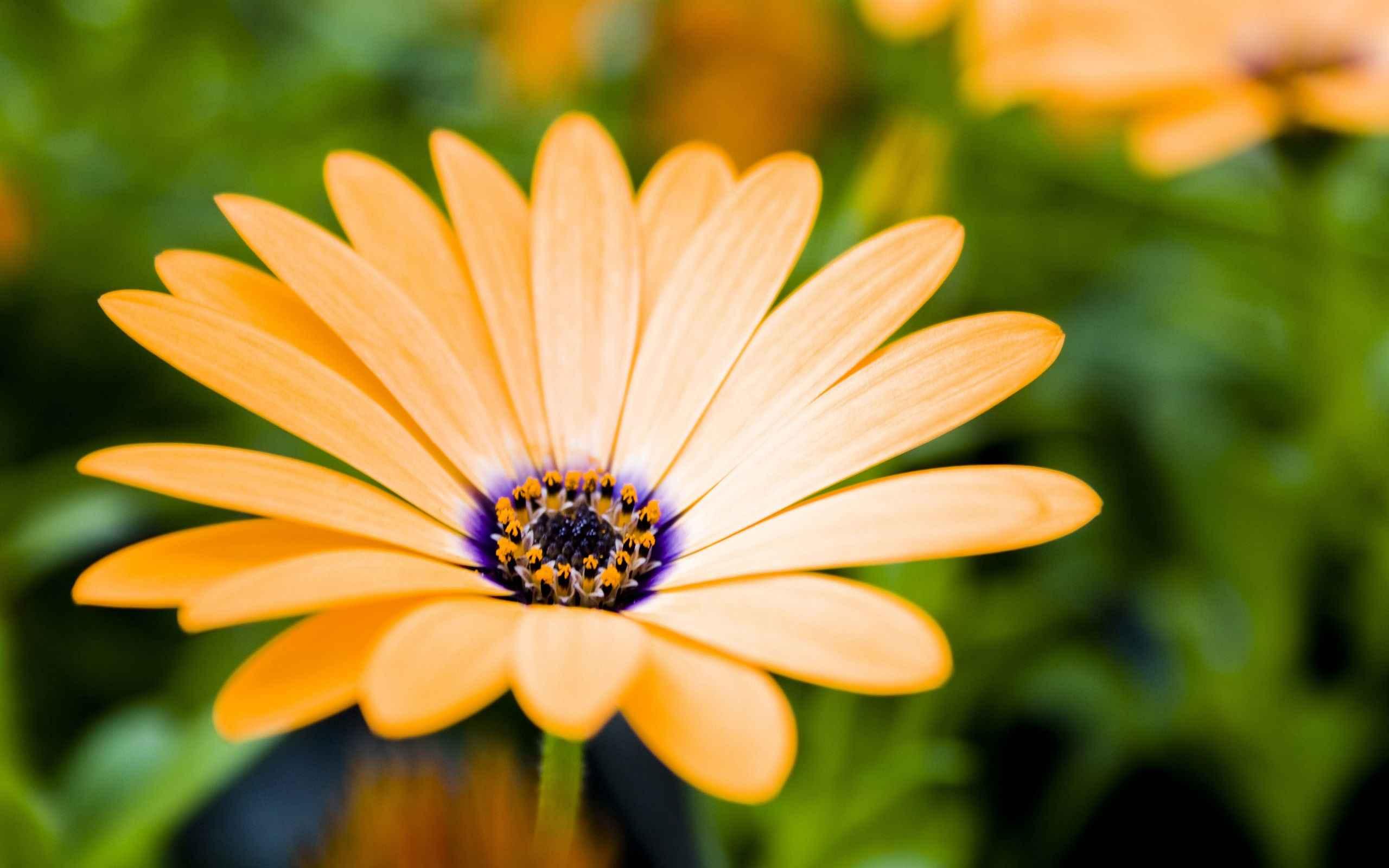 Flower Wallpaper 034