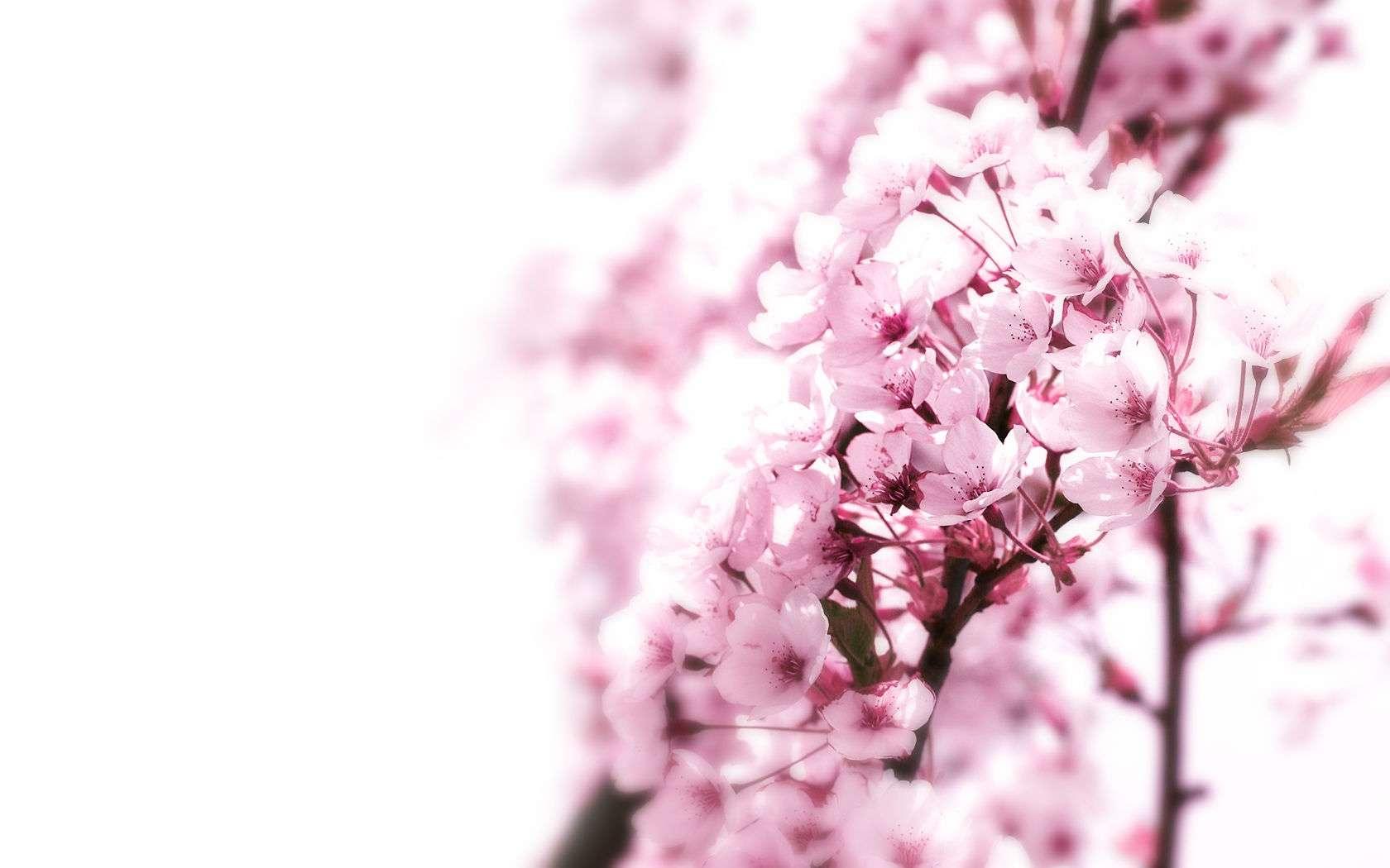 Flower Wallpaper 035