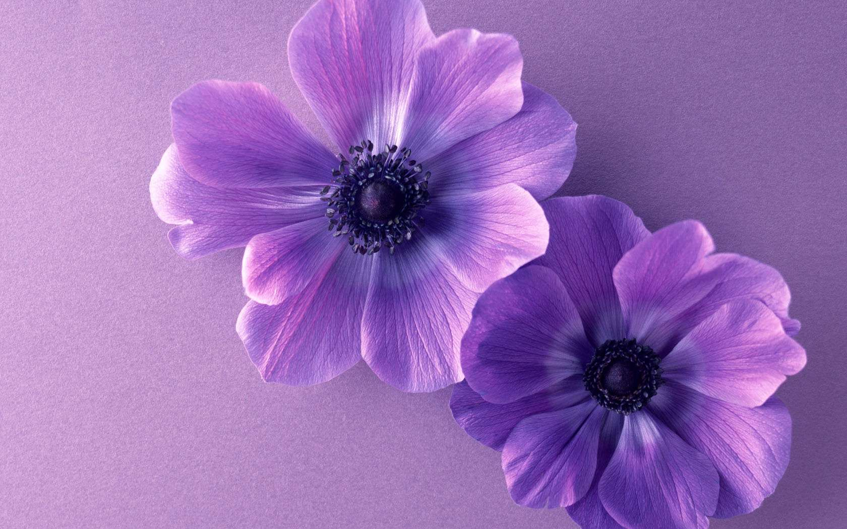 Flower Wallpaper 038