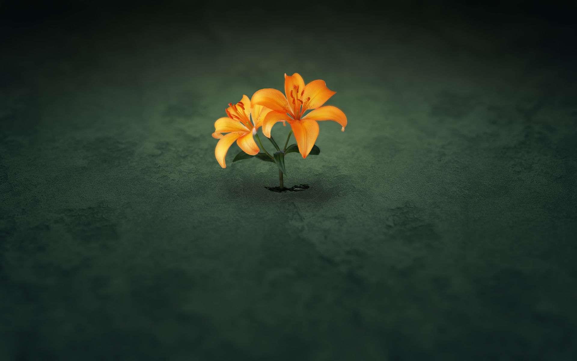 Flower Wallpaper 041
