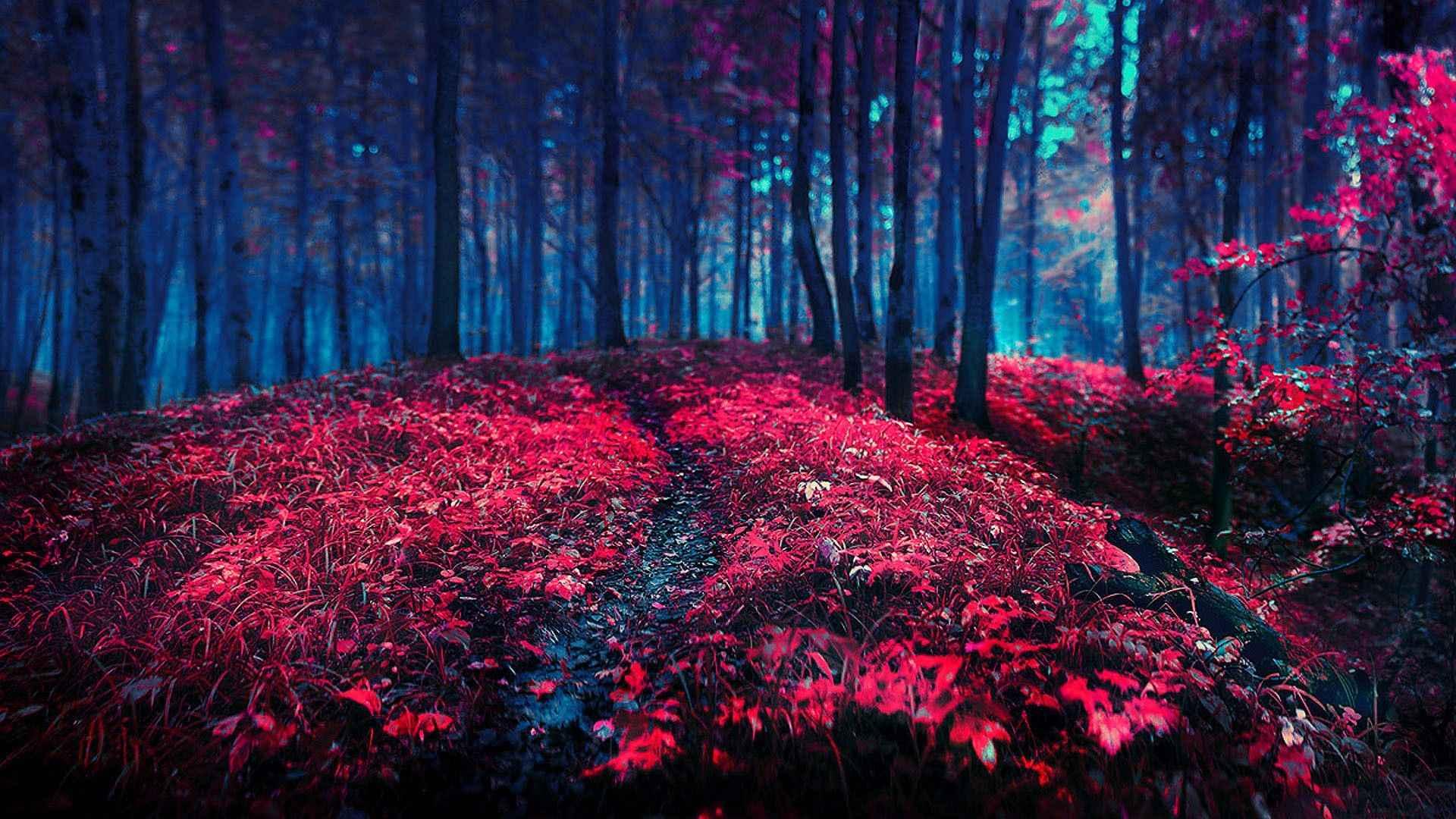 Red Wallpaper 026
