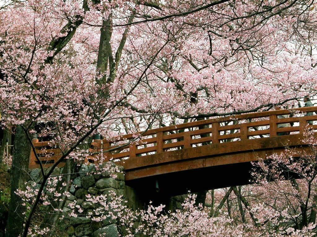 Spring Nature Wallpaper 039