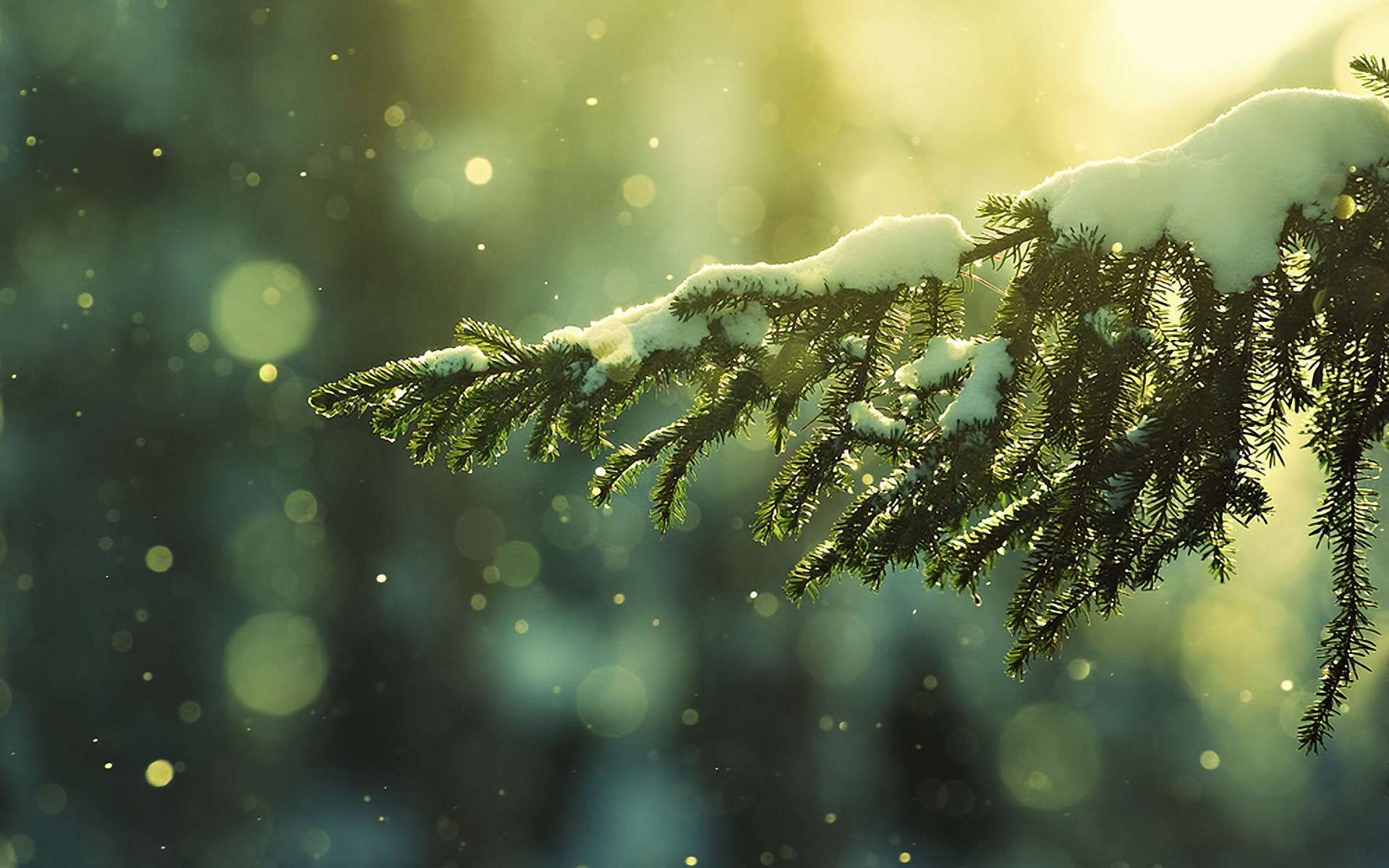 Winter Wallpaper 003