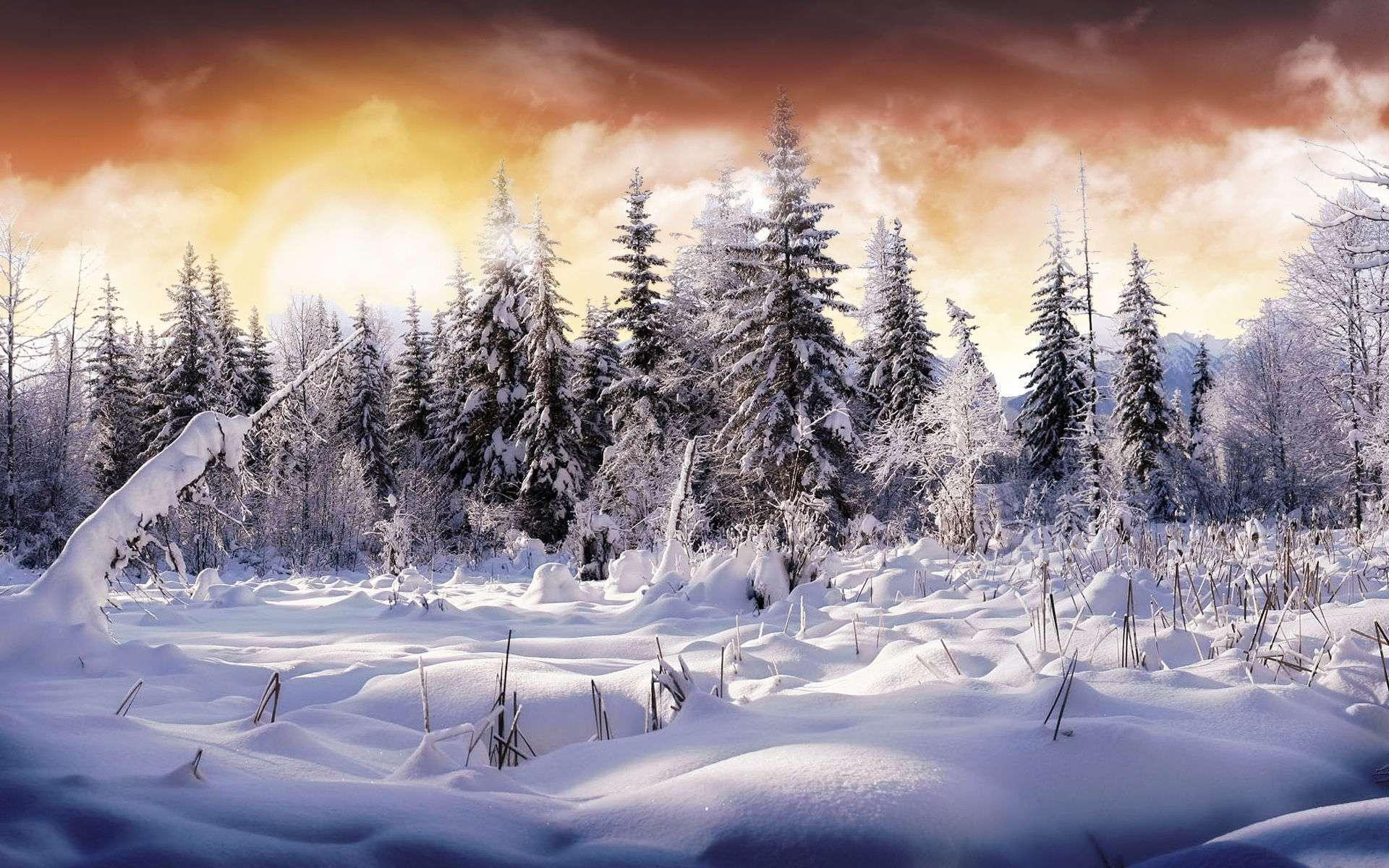 Winter Wallpaper 027