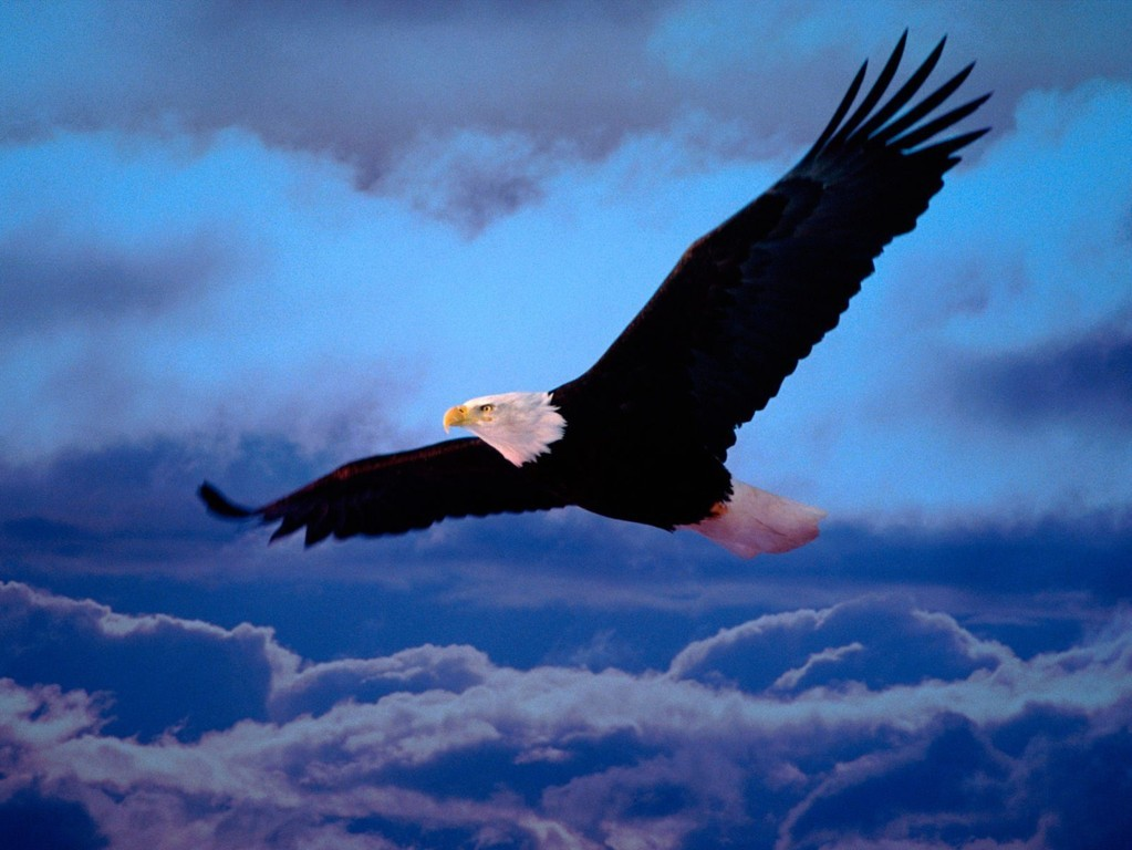 Eagle Wallpaper 36