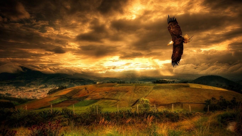 Eagle Wallpaper 5