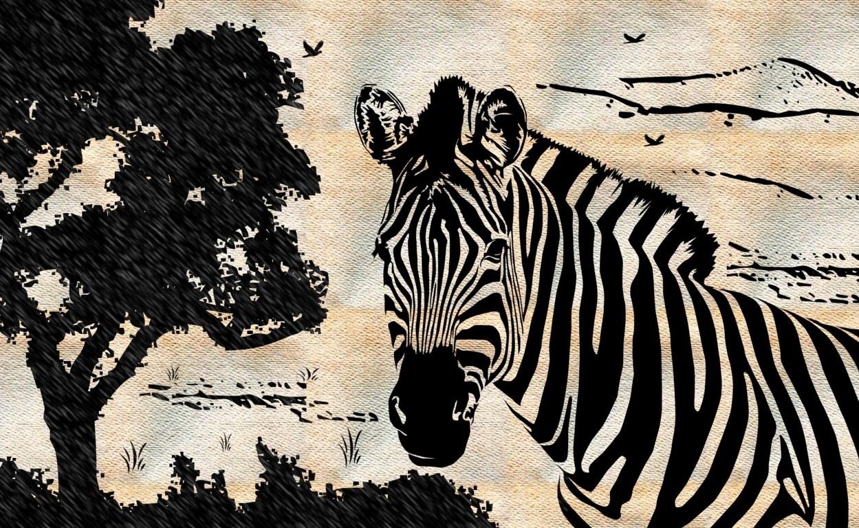 Zebra Wallpaper 2