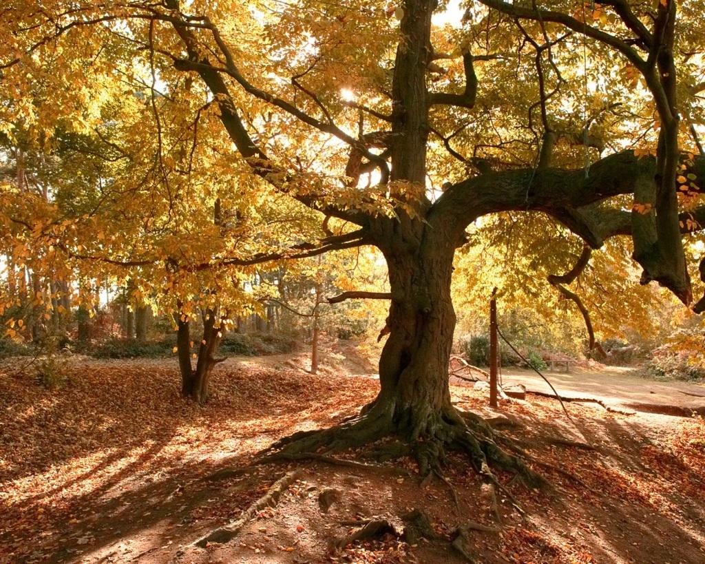Trees Wallpaper 20