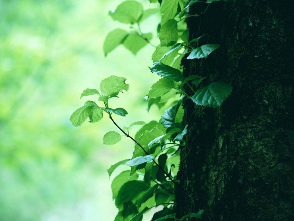 Trees Wallpaper 37