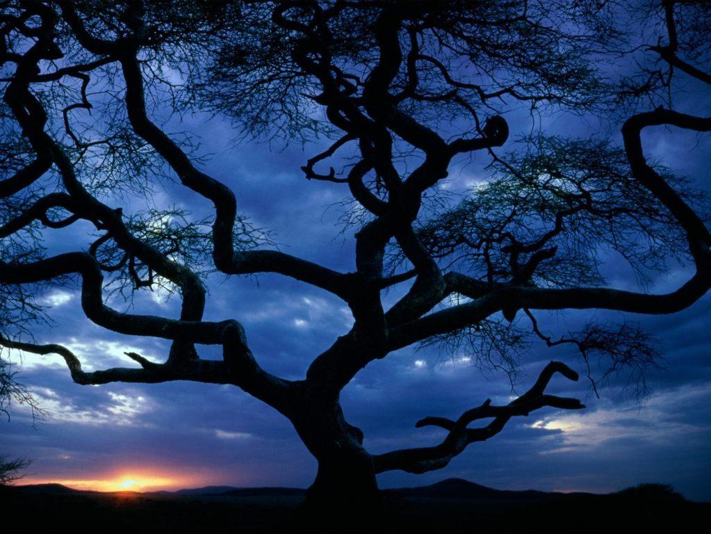 Trees Wallpaper 44