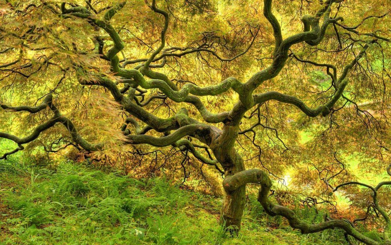 Trees Wallpaper 6