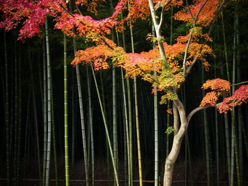 Trees Wallpaper 7