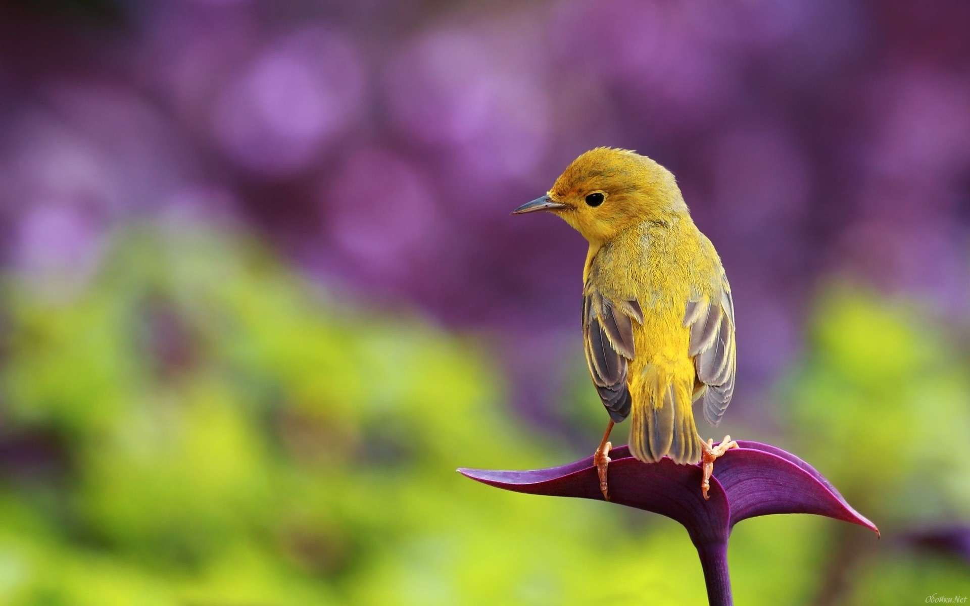 Bird Wallpaper 004