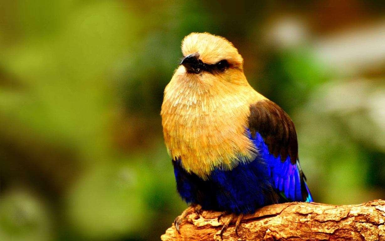 Bird Wallpaper 008