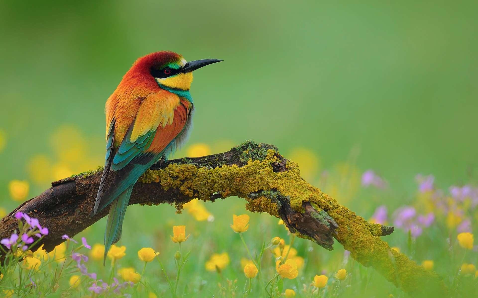 Bird Wallpaper 014