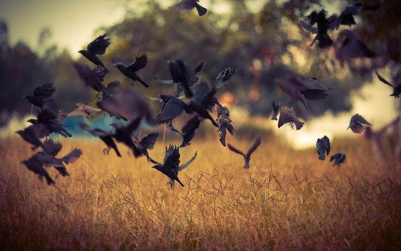 Bird Wallpaper 020