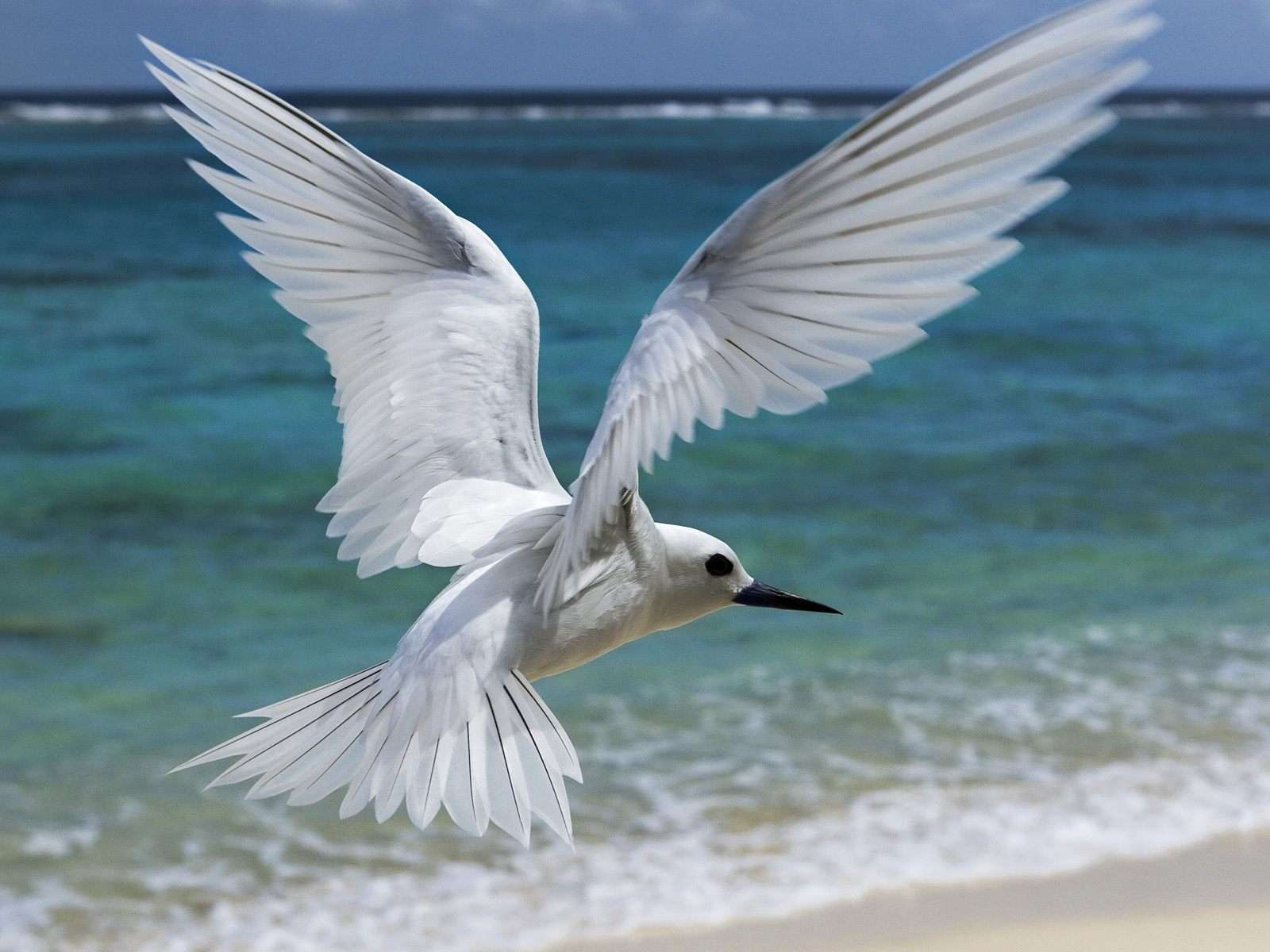 Bird Wallpaper 021
