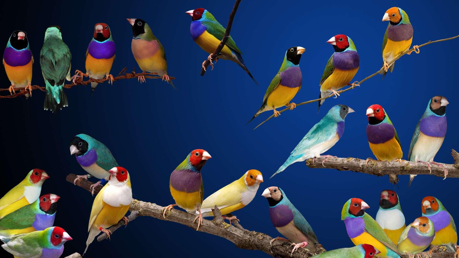 Bird Wallpaper 040