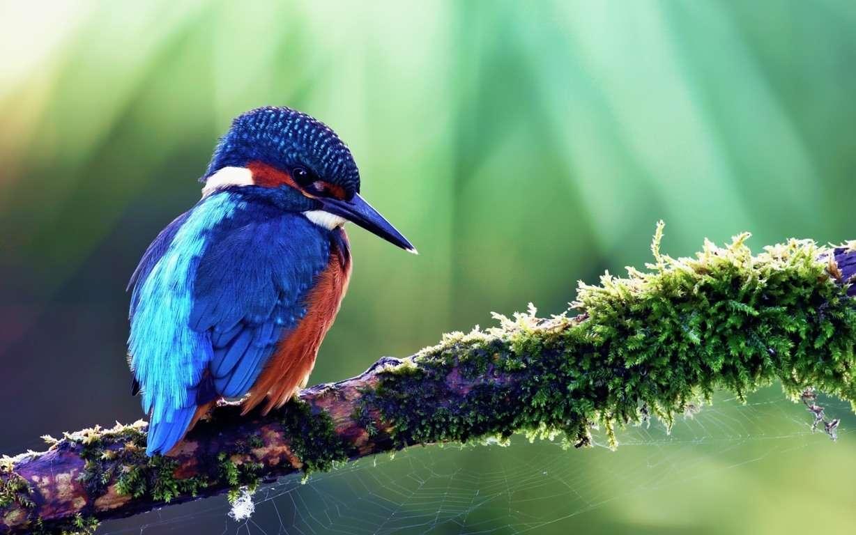Bird Wallpaper 042