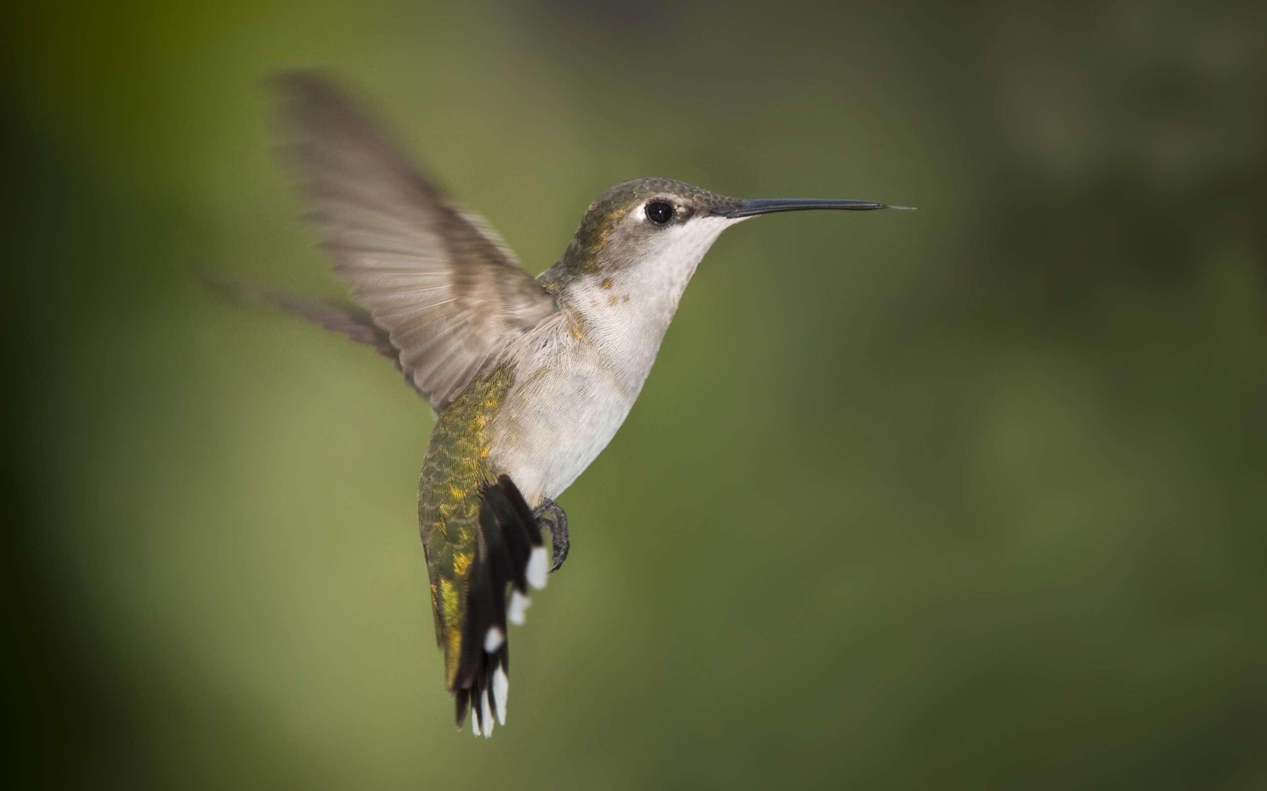 Bird Wallpaper 044