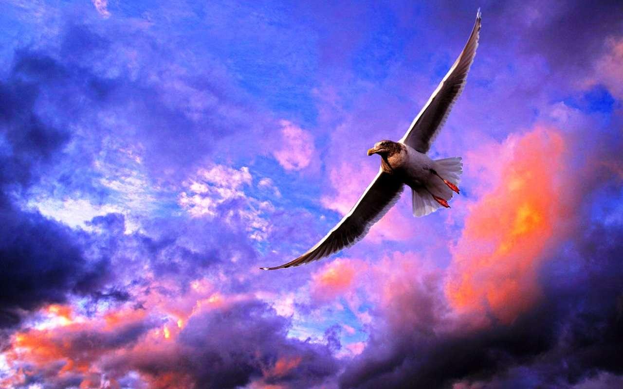 Bird Wallpaper 046