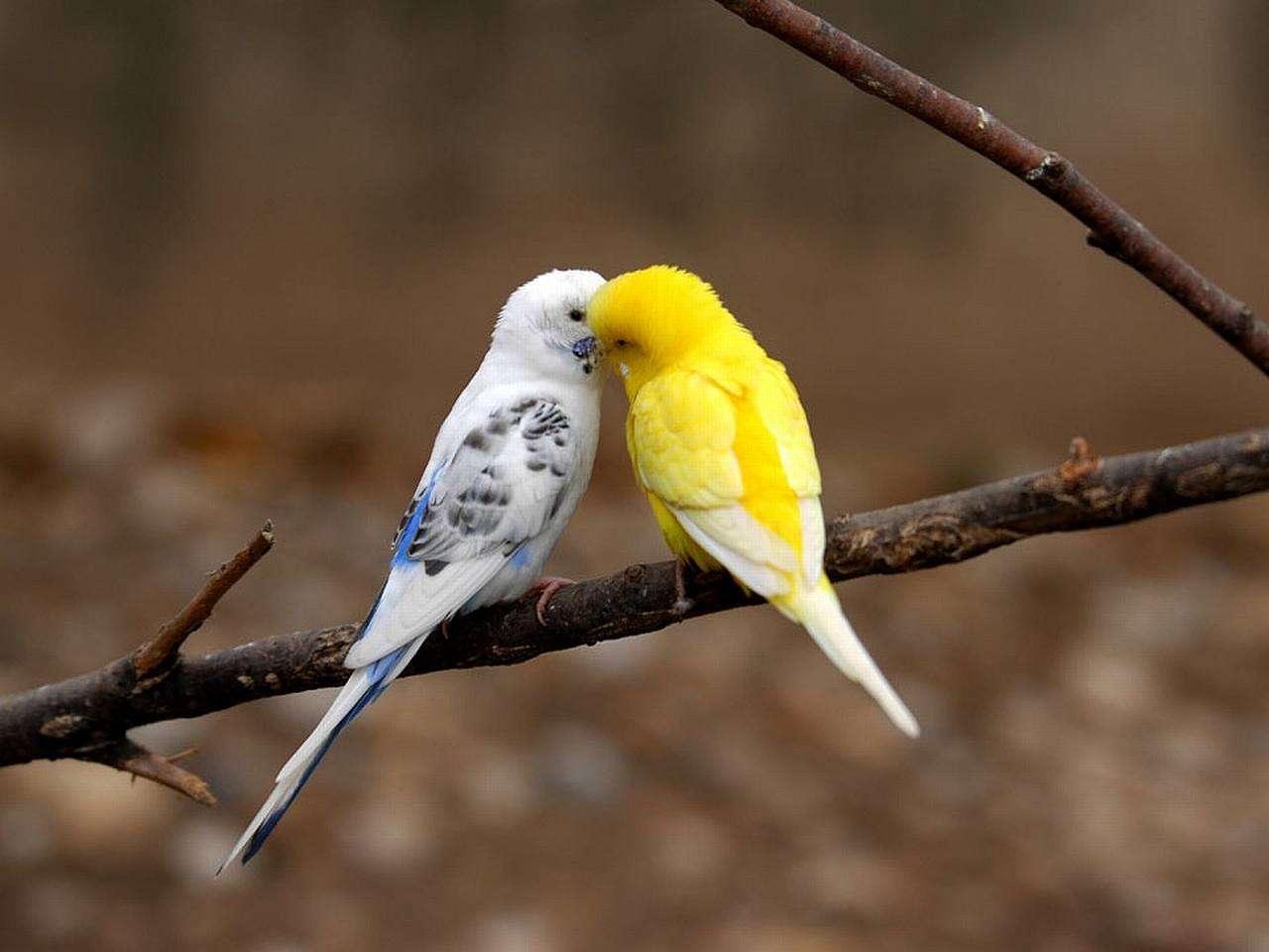 Bird Wallpaper 051