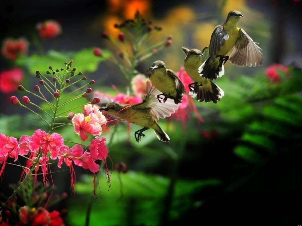 Bird Wallpaper 052