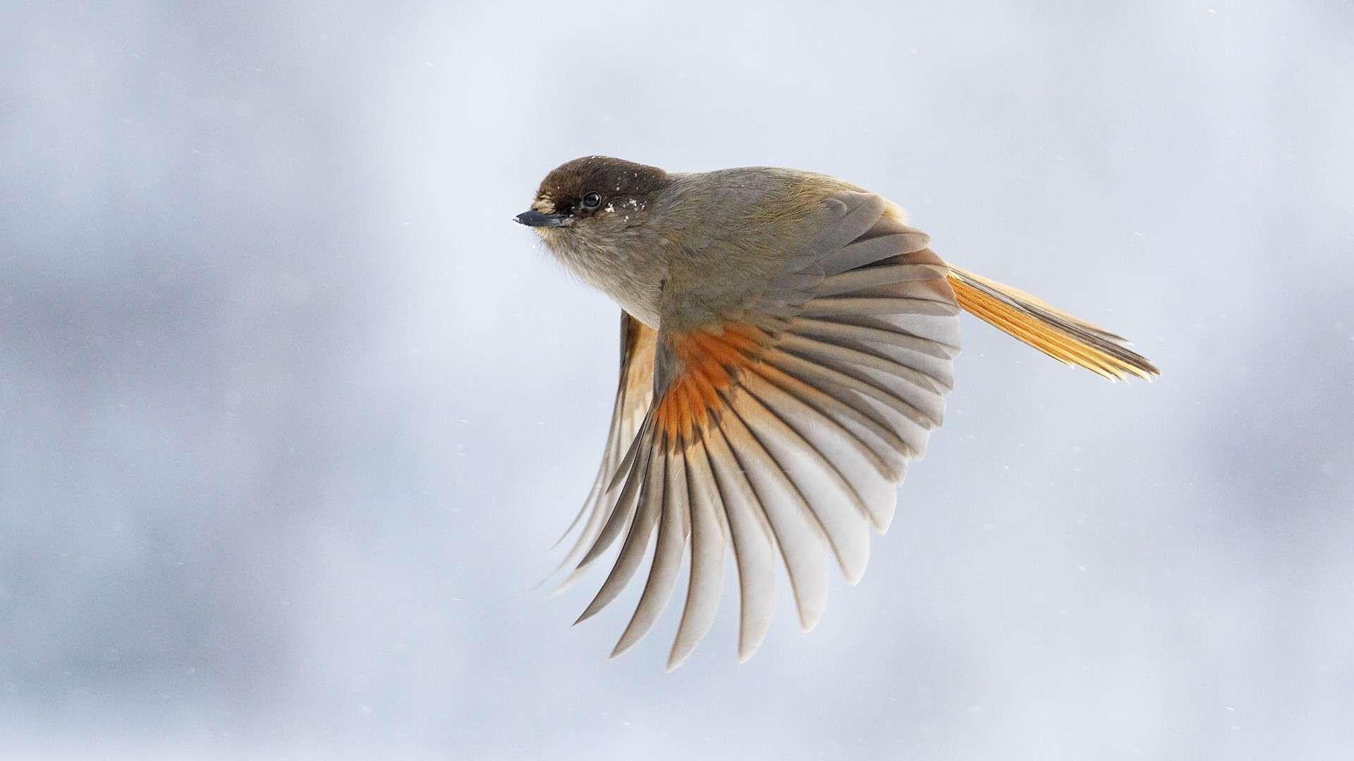 Bird Wallpaper 057