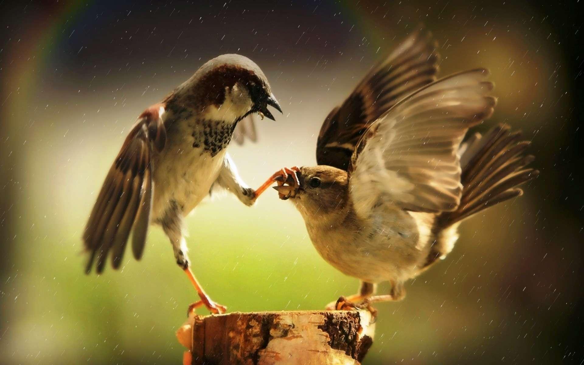 Bird Wallpaper 058