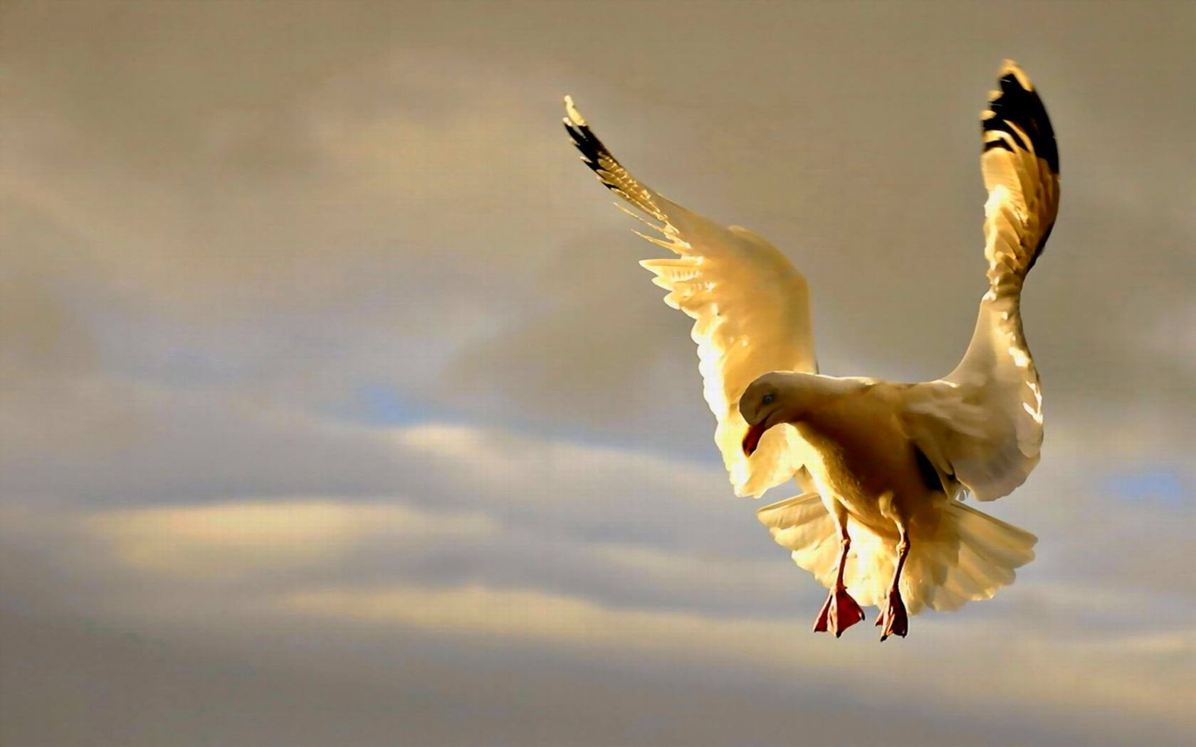 Bird Wallpaper 063