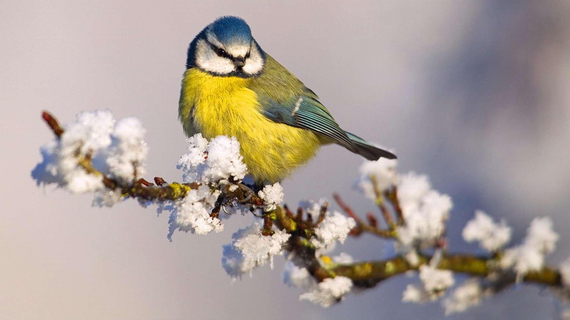 Bird Wallpaper 067