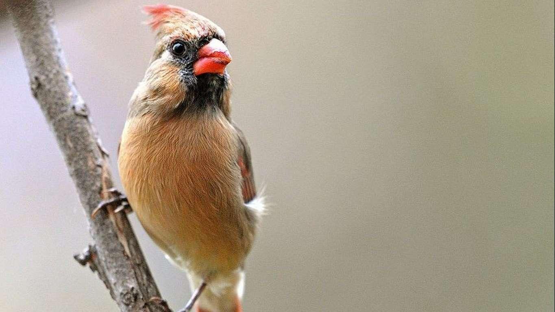 Bird Wallpaper 069