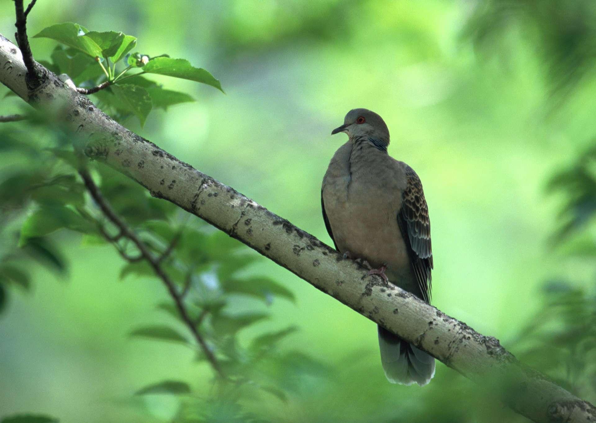 Bird Wallpaper 096