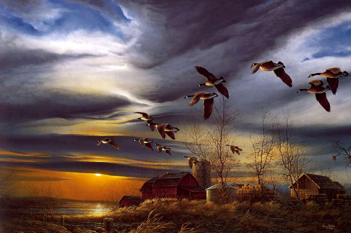 Bird Wallpaper 100