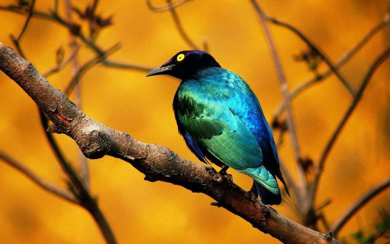 Bird Wallpaper 122