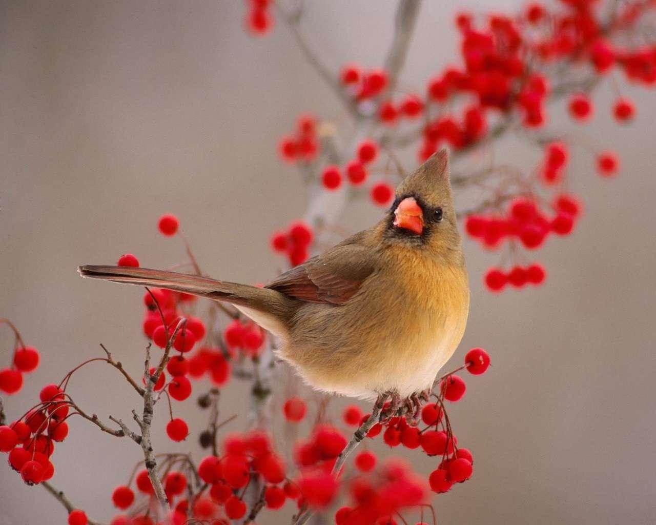 Bird Wallpaper 136