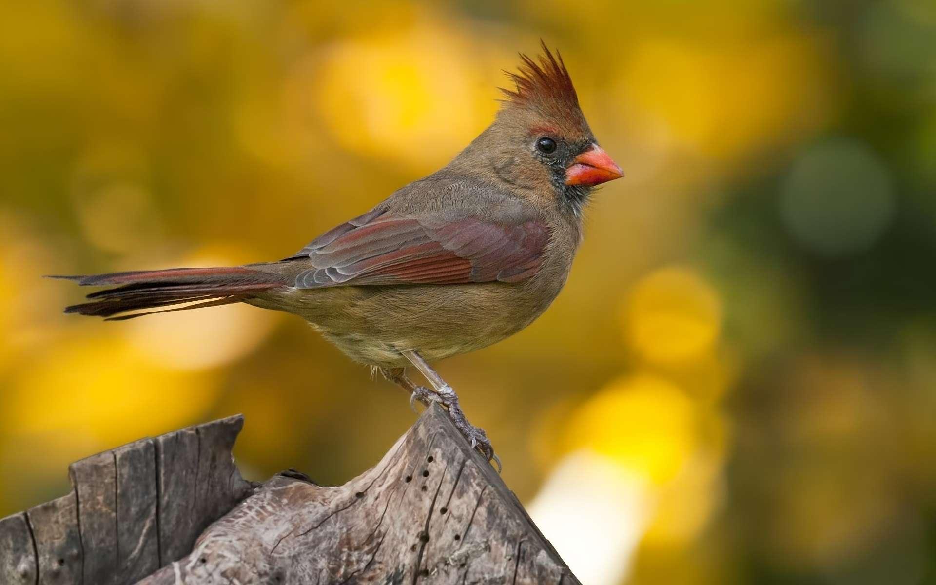 Bird Wallpaper 143