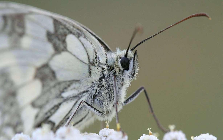Butterfly Wallpaper 012
