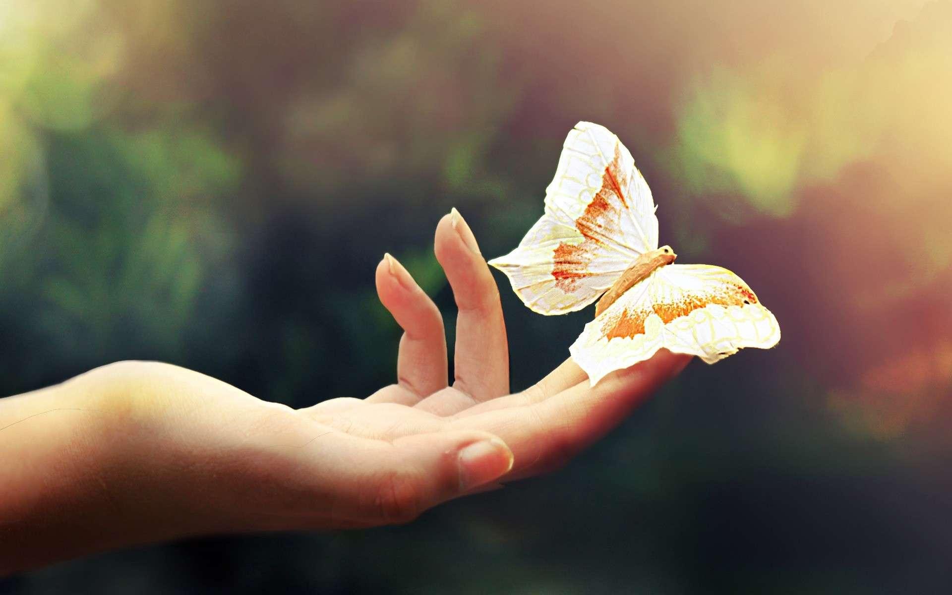Butterfly Wallpaper 013