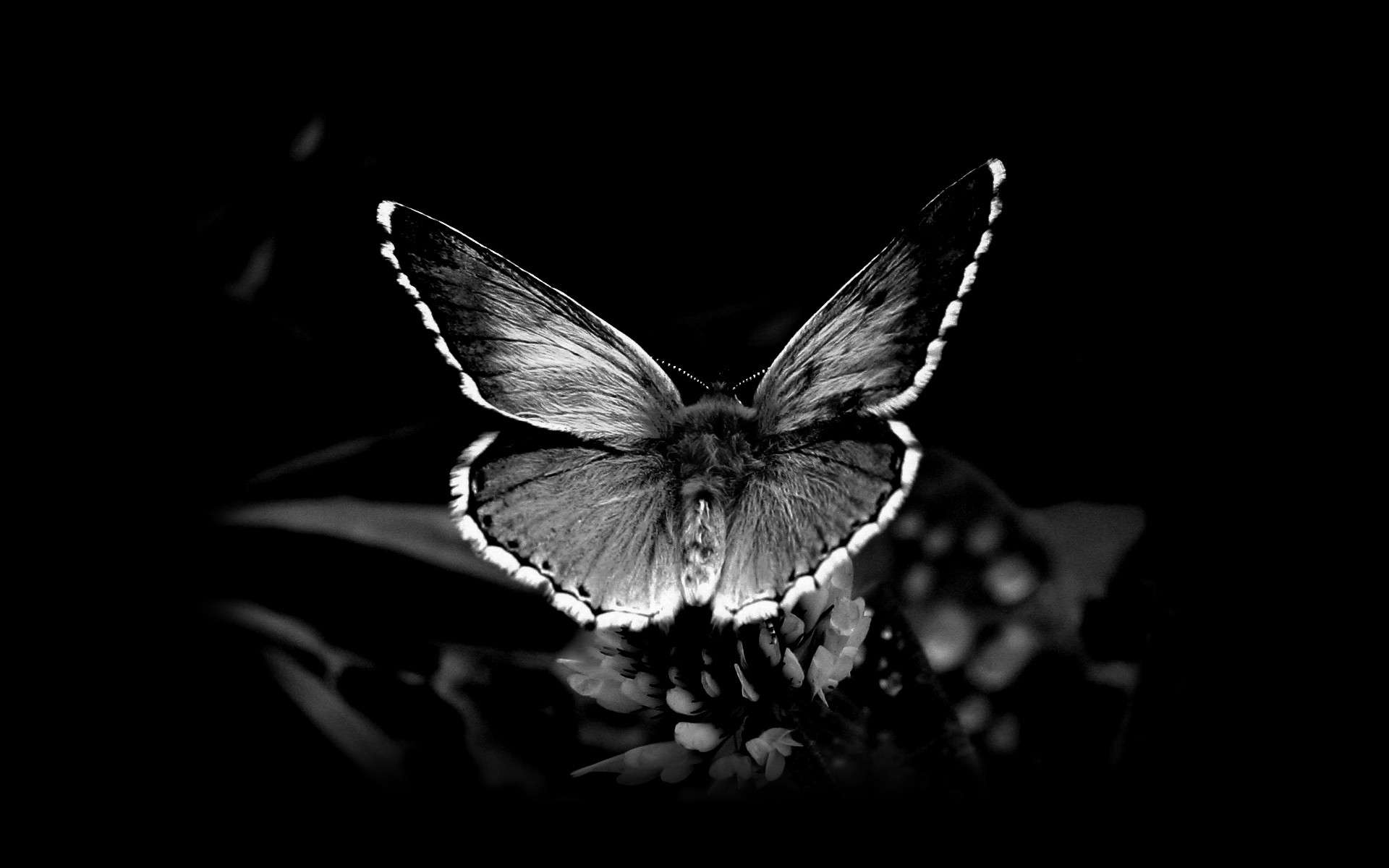 Butterfly Wallpaper 014
