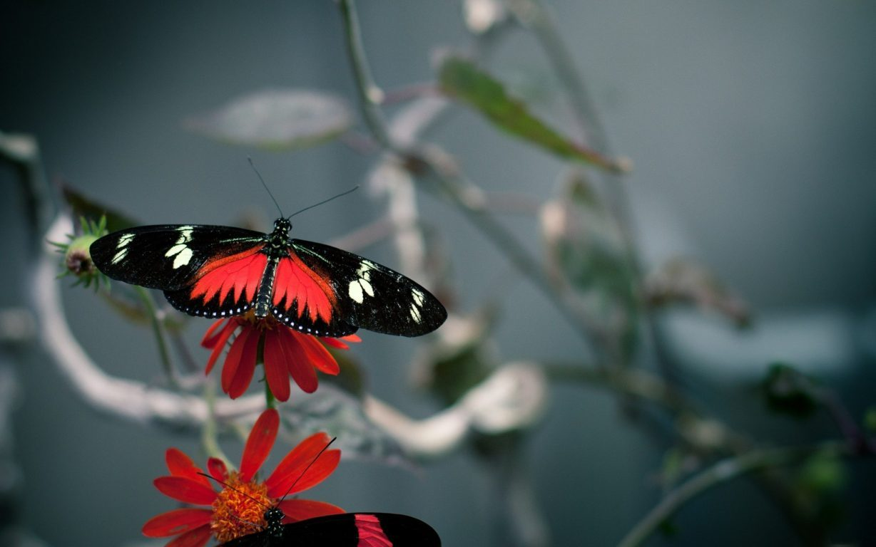 Butterfly Wallpaper 016