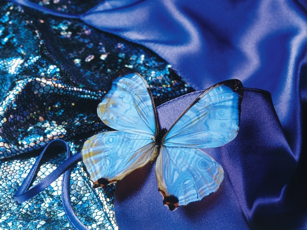 Butterfly Wallpaper 021