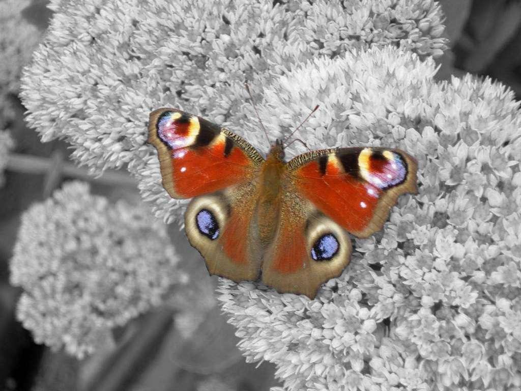 Butterfly Wallpaper 028