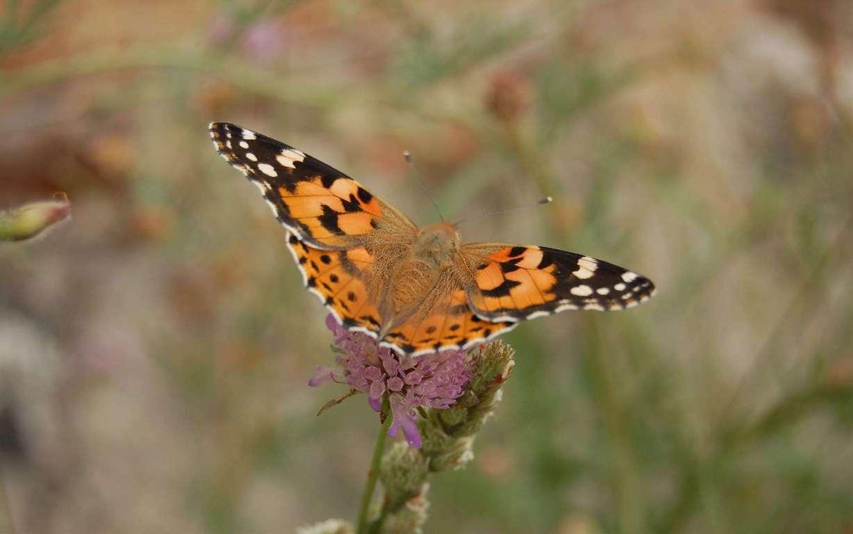 Butterfly Wallpaper 029