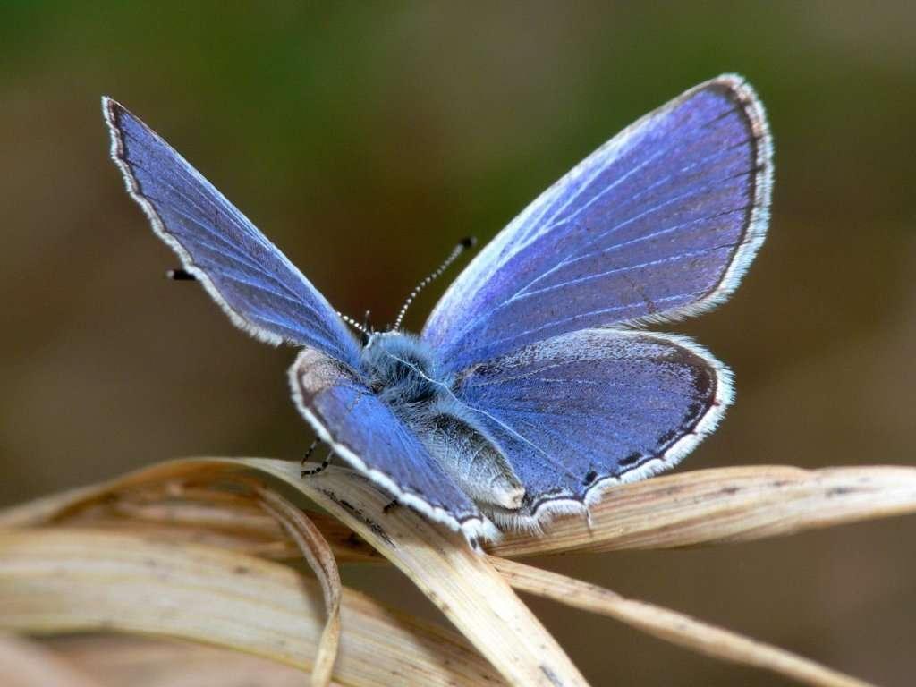 Butterfly Wallpaper 047