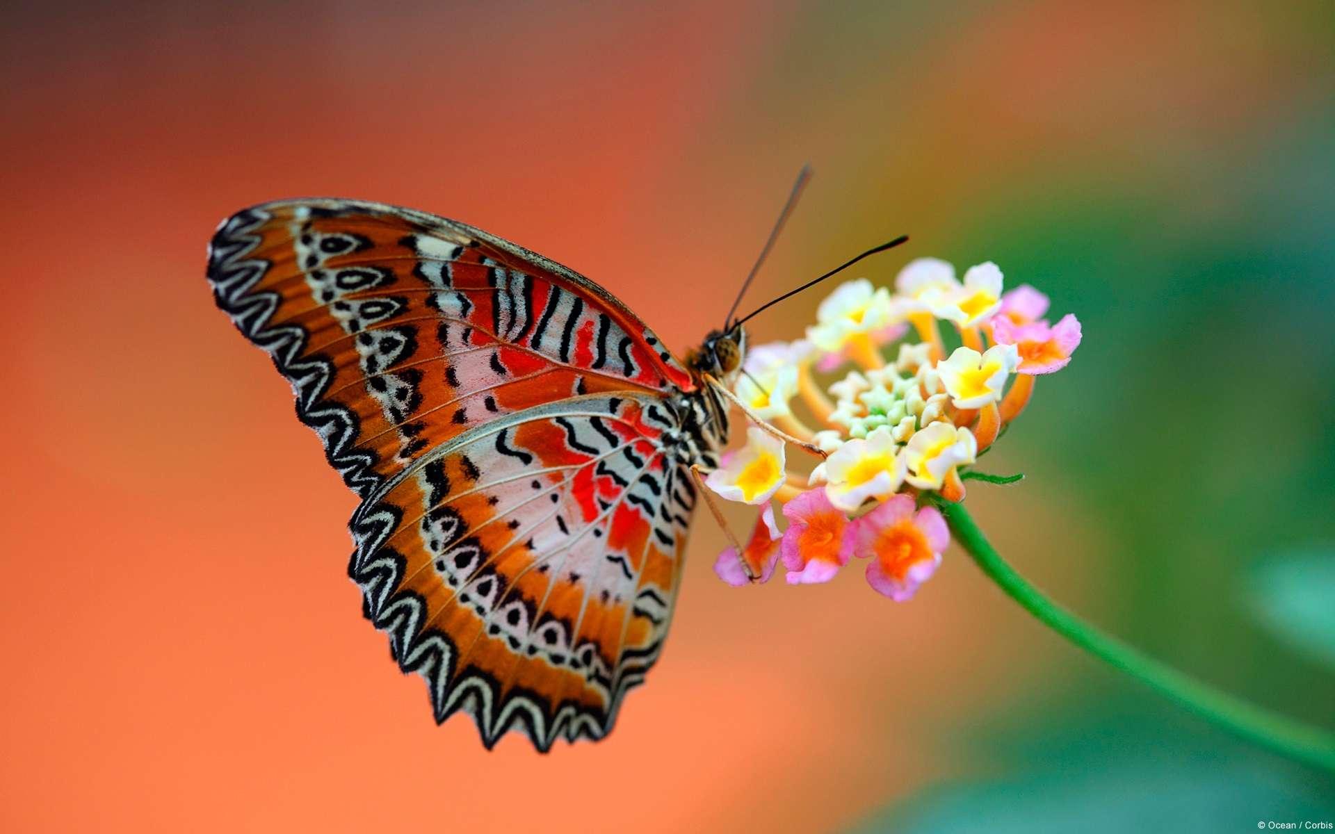 Butterfly Wallpaper 048