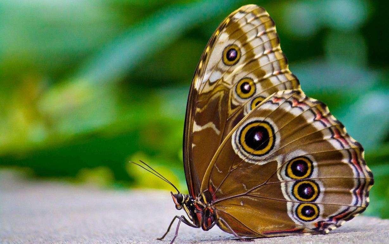 Butterfly Wallpaper 049