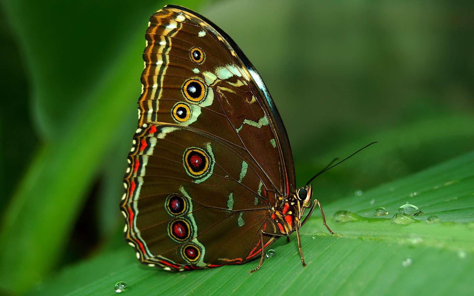 Butterfly Wallpaper 050