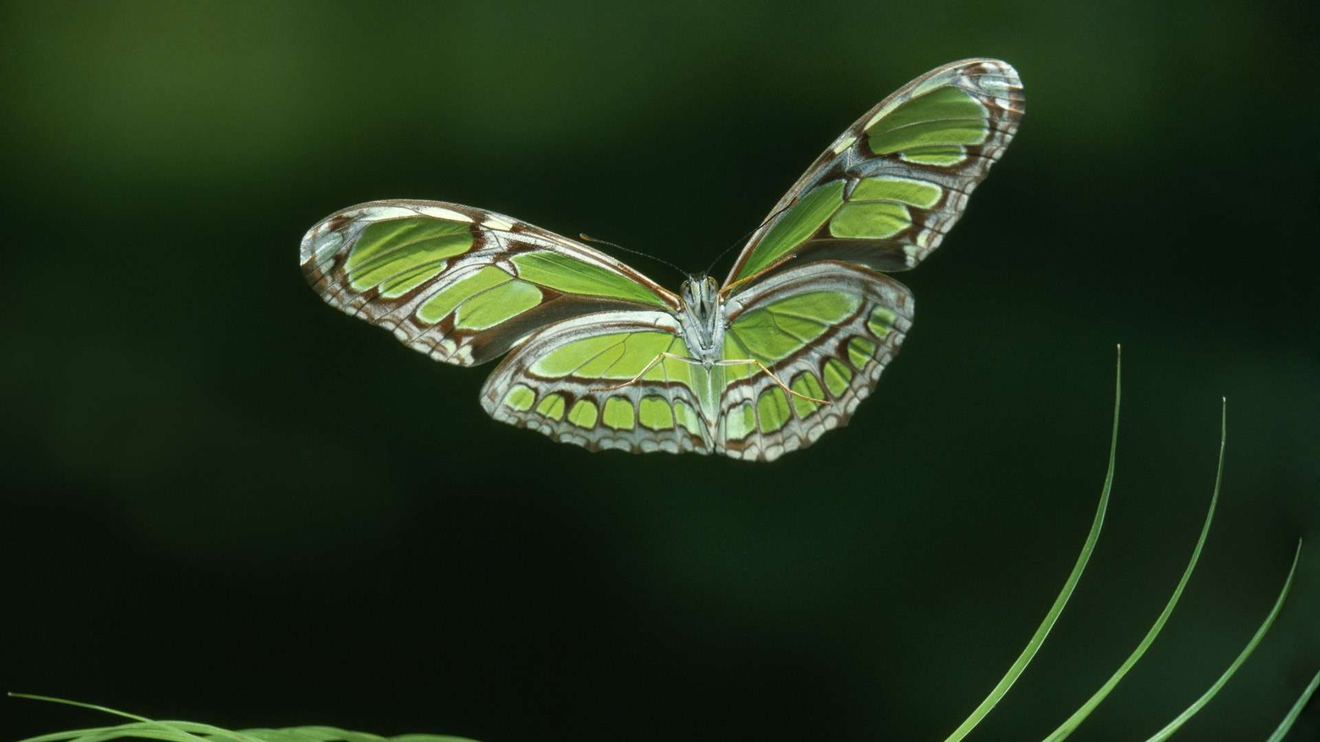 Butterfly Wallpaper 055